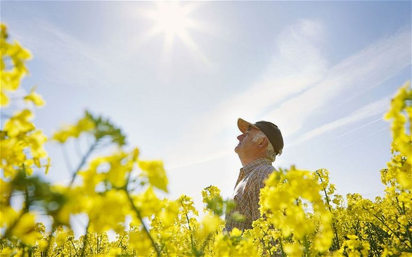 Health Benefits of Vitamin D for the Elderly