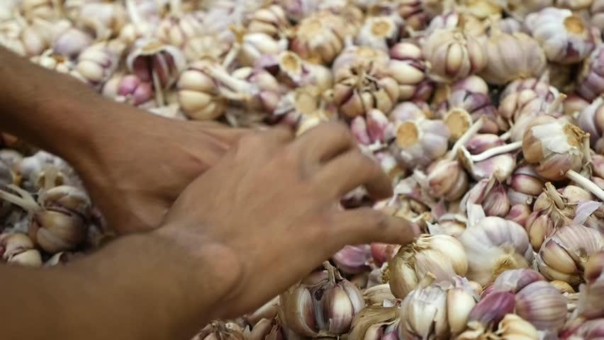 health benefits of garlic for elderly