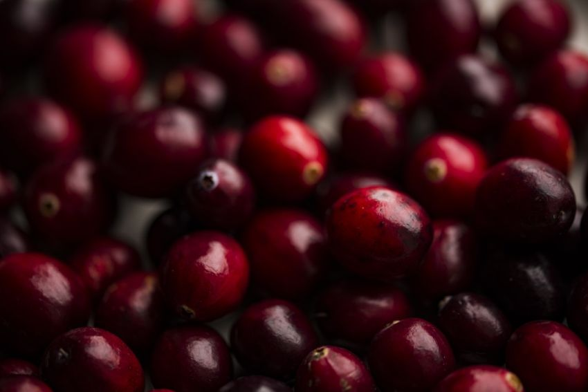 Health benefits of acai for older adults 1