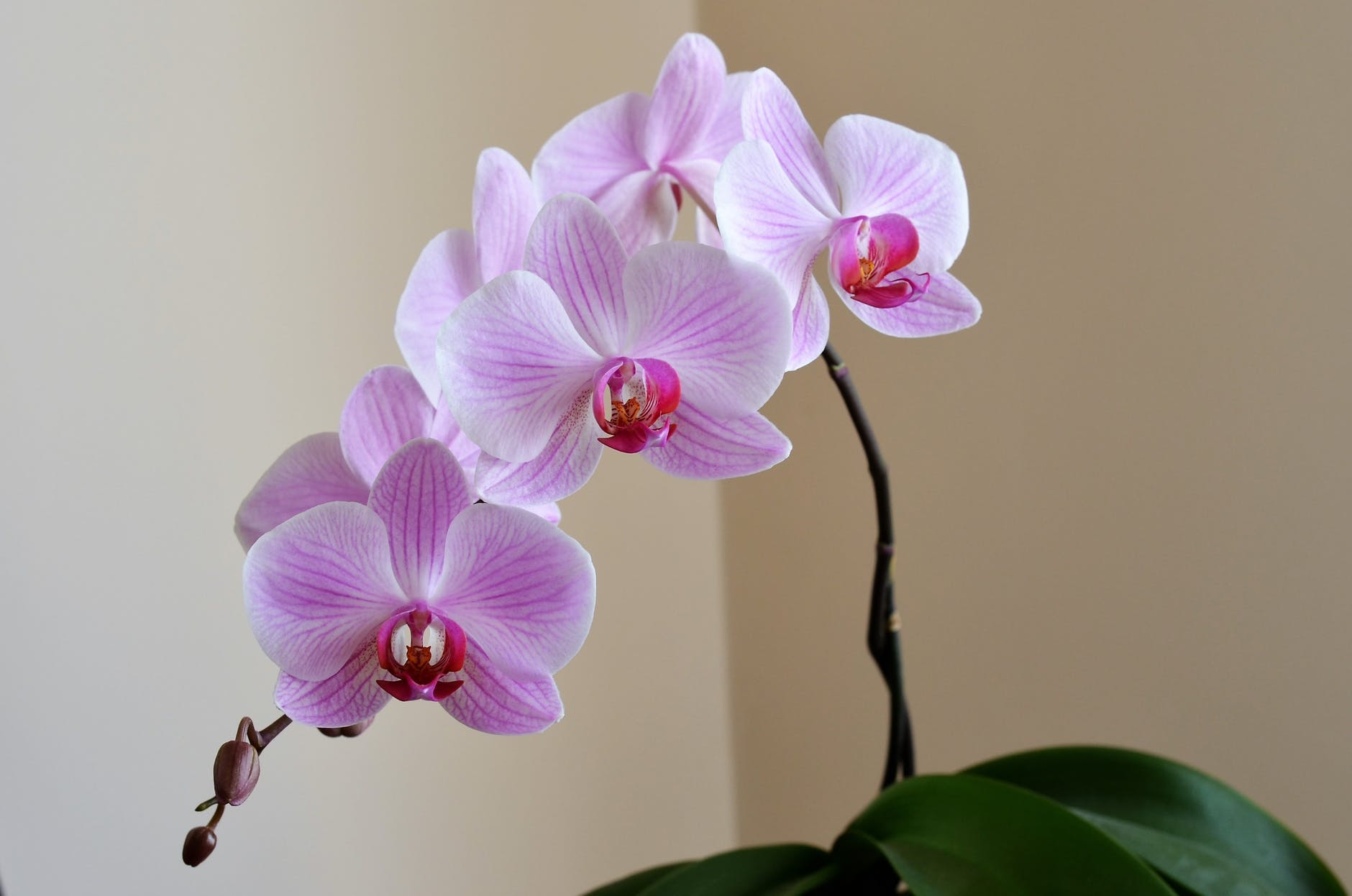4 plants older adults can easily care for in a small space