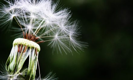 Best Ways to Stave Off Seasonal Allergies