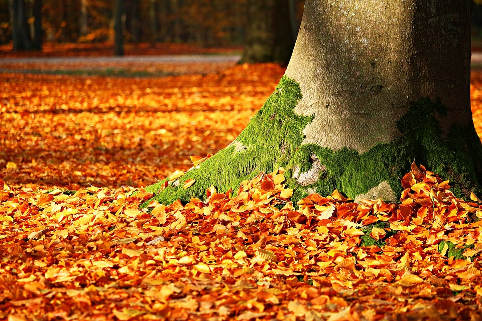 5 Fun Autumn Activities to Do with the Grandkids