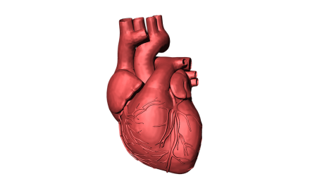 AFib Life Expectancy: How Long Can You Live with Atrial Fibrillation?