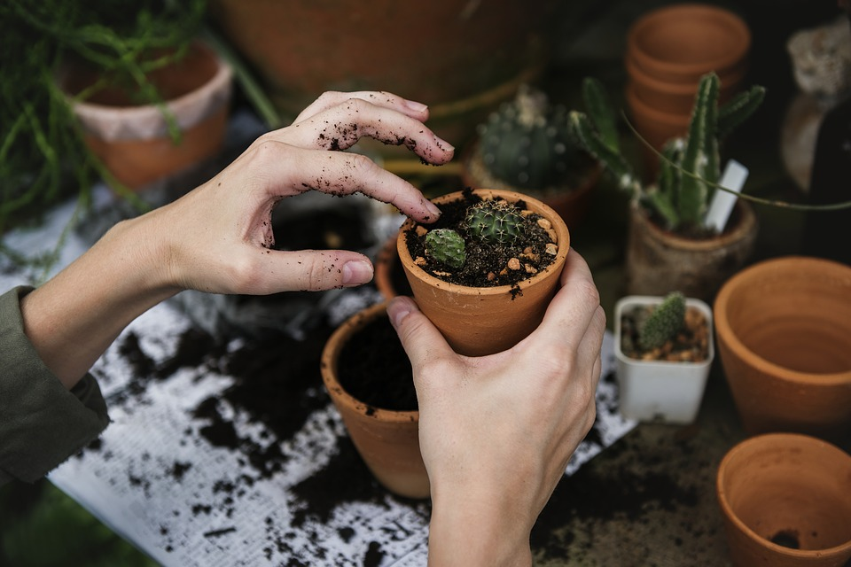 Tips for Safe Gardening for Older Adults