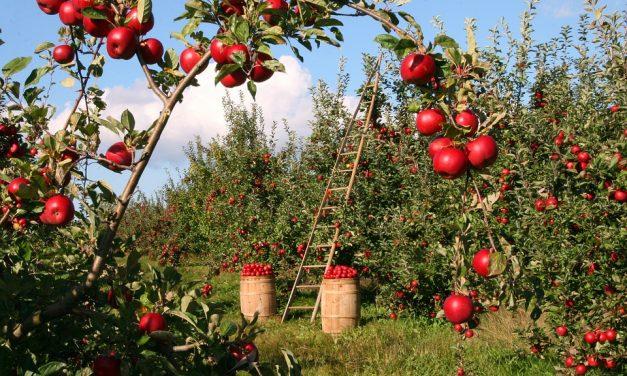 Tips for Safe Gardening for Older Adults