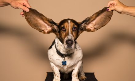 Hearing Problems in the Elderly