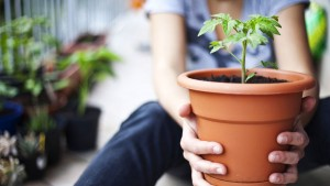 Container Gardening: 5 Steps to Growing Organic Vegetables in Small Spaces